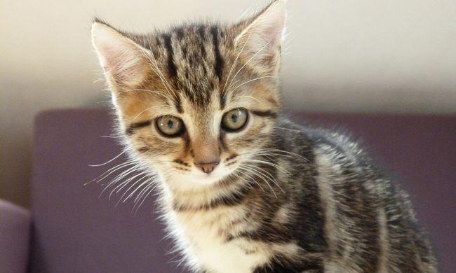 Ma van a macskák világnapja - videók
