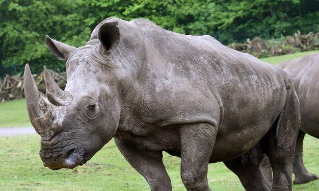 Meghalt a világ legidősebb orrszarvúja