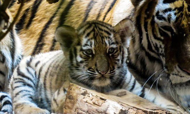 Bezárta az állatkertjeit, elvisz 3500 állatot
