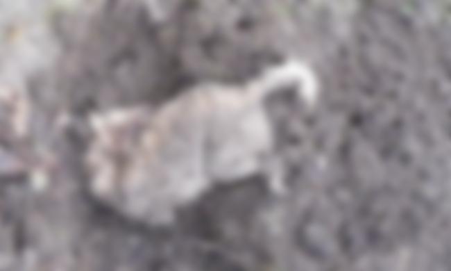 Állatkínzók: befogták és karóval ütöttek agyon egy kutyát