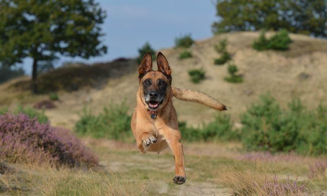 Ajándék kutyát kapott a francia rendőrség