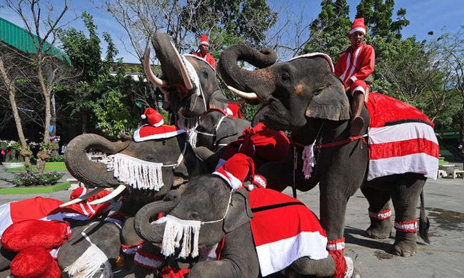 Elefántok pirosban, cukrok a levegőben - furcsa karácsonyi szokások