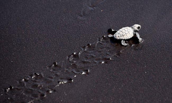 Több teknőssel ütköznek a repülők Amerikában, mint drónnal
