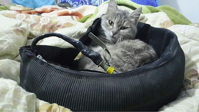 Beteg képeket posztol az Iszlám Állam toborzója: robbanóövet rak a macskájára
