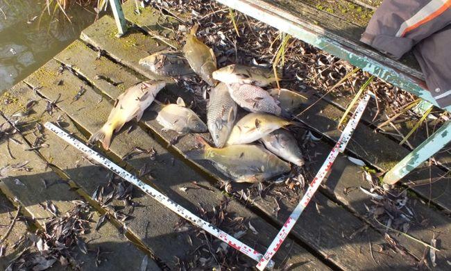 110 kilogramm halat fogtak a dombóvári orvhalászok