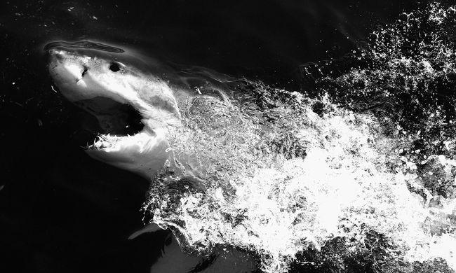 Cápa harapott egy búvár karjába