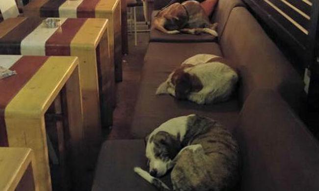 Egy kávézó zárás után kóbor kutyáknak ad otthont