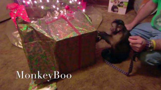 Bűbájos videók: így bontották ki a karácsonyi ajándékokat az állatok