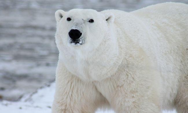 Különös medvetámadás áldozata lett egy férfi, az állat sem élte túl