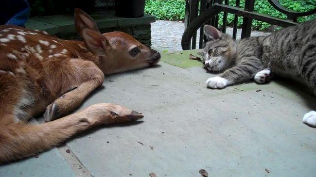 A cica mindent megtesz, hogy felhívja magára a figyelmet - videó