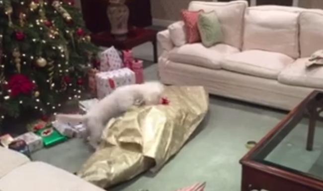 Nem bírt magával a kutya, miután kicsomagolta az ajándékát - videó