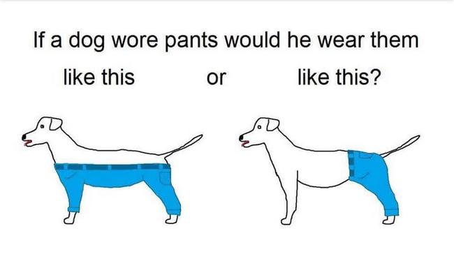Ezen vitázik most az egész internet: hogy hordanák a kutyák a nadrágot?
