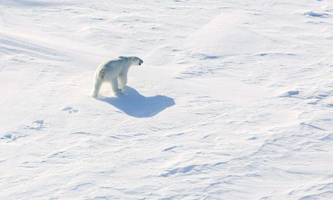 Idén 100 ezer év óta először tűnhet el a jég a sarkvidékről