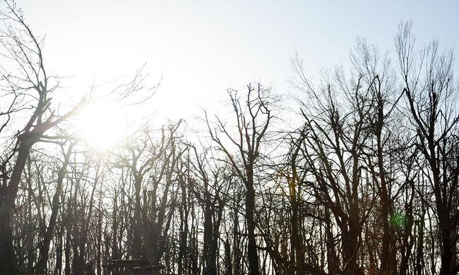 Kirándulni mentek a pesti tinik, eltévedtek az erdőben
