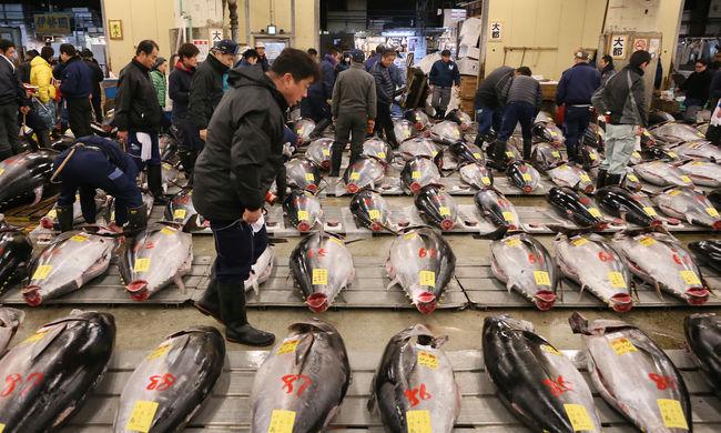 33 millió forintnyi pénzt adott a szusilánc egyetlen tonhalért