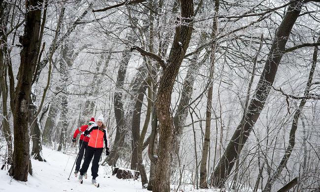 Holttest az erdőben: megtalálták az eltűnt síelőt