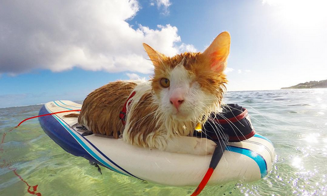 Imád úszni és szörfözni az egyszemű cica - videó