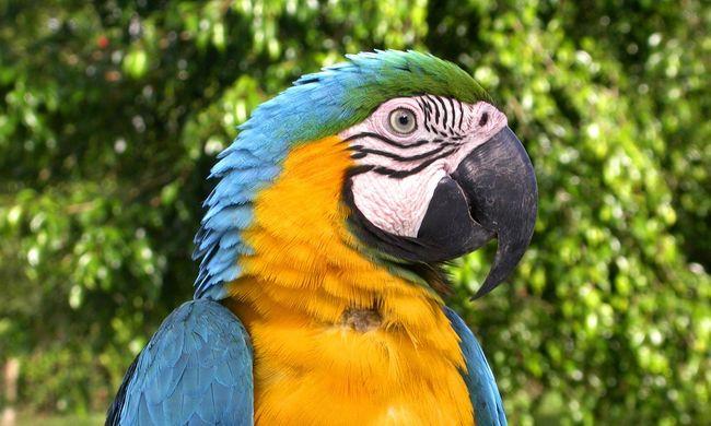 Papagája mentette meg az életét