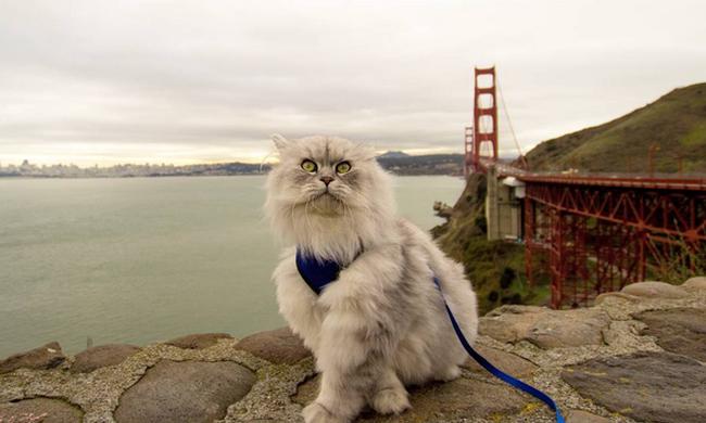 Pórázon járja be a világot Gandalf, a cica