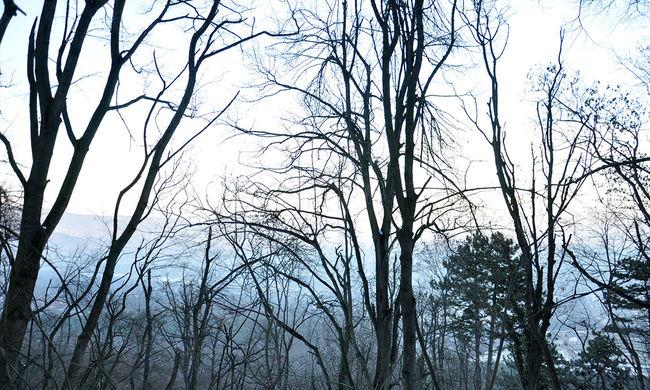 Sétálni indultak az erdőbe a gyerekek, rosszul végződött a kaland