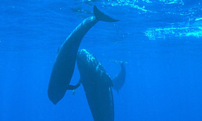 Tömegesen vetődtek partra a delfinek Indiában