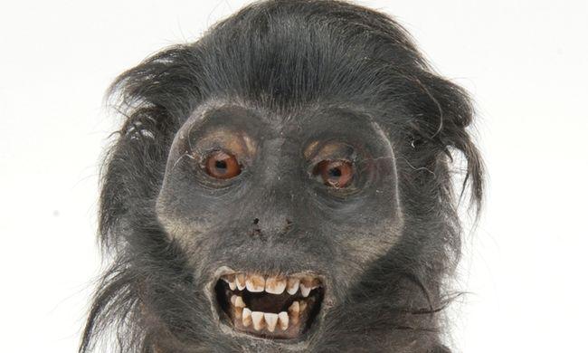 George Bush majomfejeket árult és állatpornója is volt