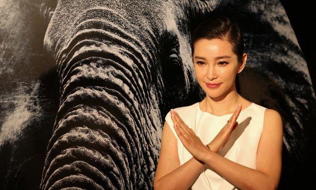 Fokozatosan megszüntetik az elefántcsont-kereskedelmet