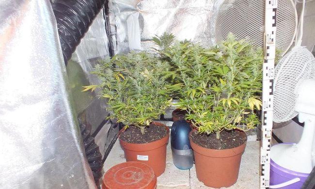 Kábítószert termesztett a garázsban