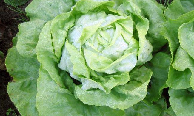 Kifogyott a zöldség, nincs utánpótlás: konganak a polcok az ürességtől