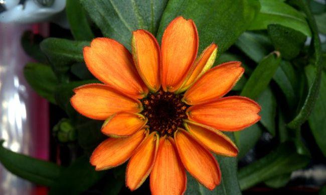 Virág nyílt a világűrben