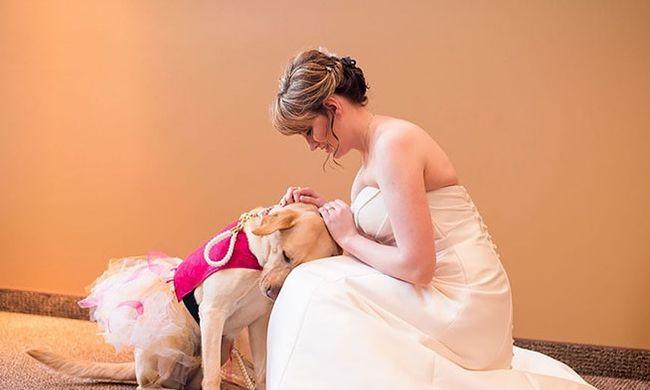 Kutya nyugtatta meg az ideges menyasszonyt