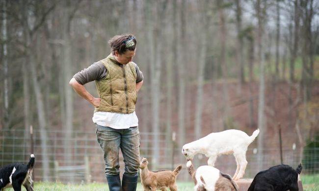 Álommunka: kecskeölelgetőket keresnek egy farmra