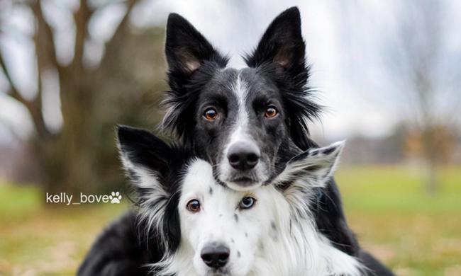 Elképesztően pózolnak a kamera előtt a világ legfotogénebb kutyái - videó!