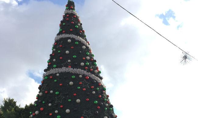 Pénteken állítják fel az ország karácsonyfáját, húsz méter magas lesz