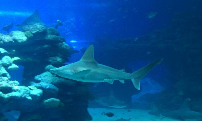 Kiszabadultak a cápák, mindent elöntött a víz - videó