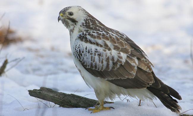 Áram ütötte agyon a védett madarakat, több mint egy tucat tetem feküdt a Zagyva-parton