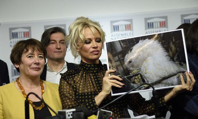Leszoktatná a franciákat a libamájról Pamela Anderson