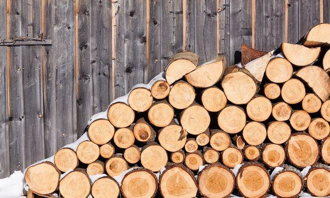Gyanús lett, hogy 150 teherautónyi fát tüzelt el