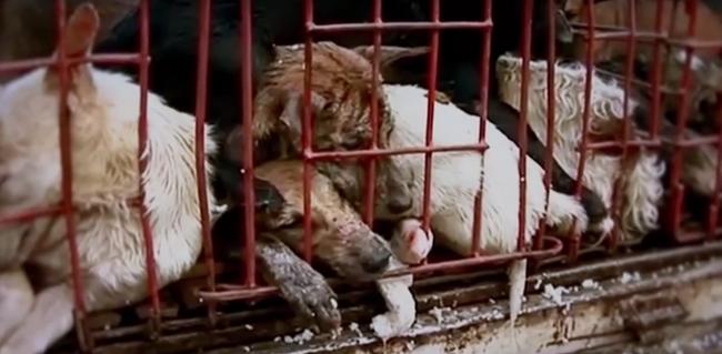 64 kutya életét mentették meg, borzasztó halál várt volna rájuk