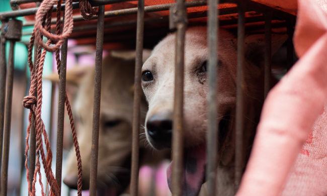 Iszonyatos szenvedés: élve főzik meg a kutyákat a turistáknak
