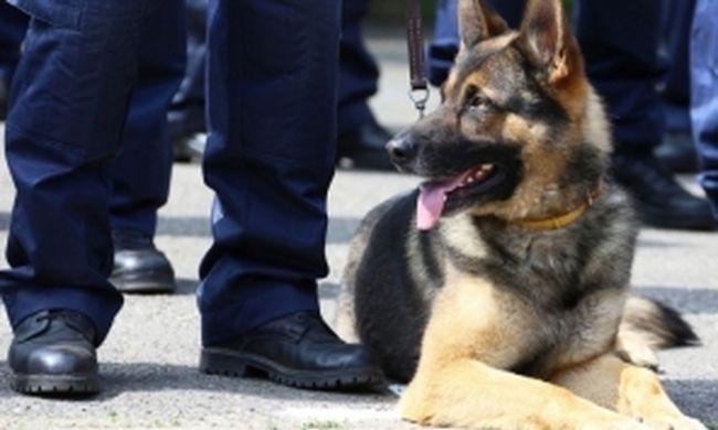Kutya vezette a rendőröket a tolvajok házáig