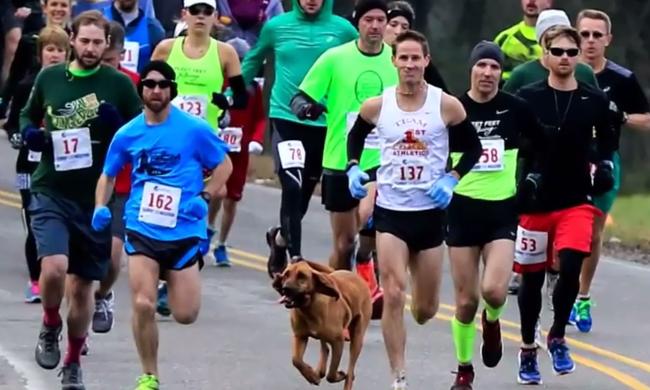 Pisilni engedték ki a kutyát, véletlenül hetedik lett a futóversenyen