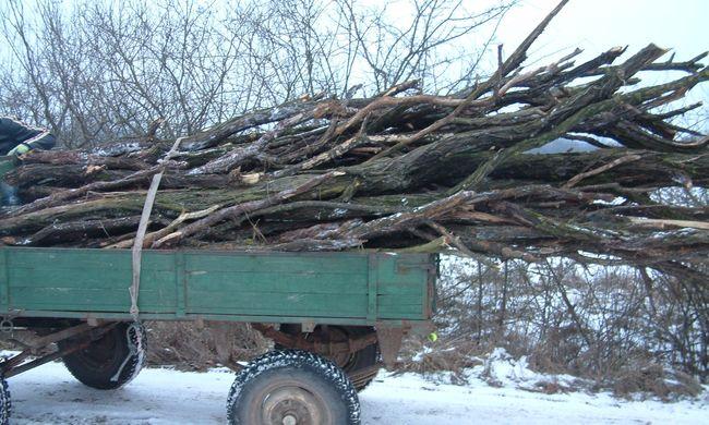 Lovas kocsival lopott fát két fiú