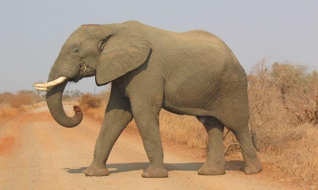 Megölte az elefánt a férfit, aki szelfizni akart vele