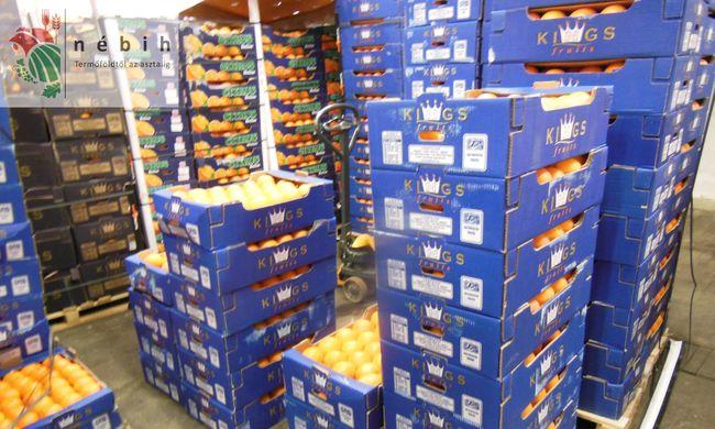 Több tonna jelöletlen narancsot semmisítettek meg
