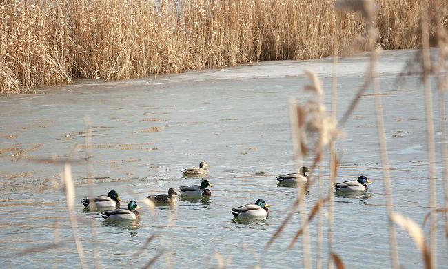 Lefolyástalan tóvá válhat a Balaton