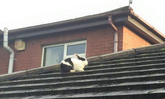 Répára is szükség volt: nyuszit kellett menteni a tetőről a vihar után