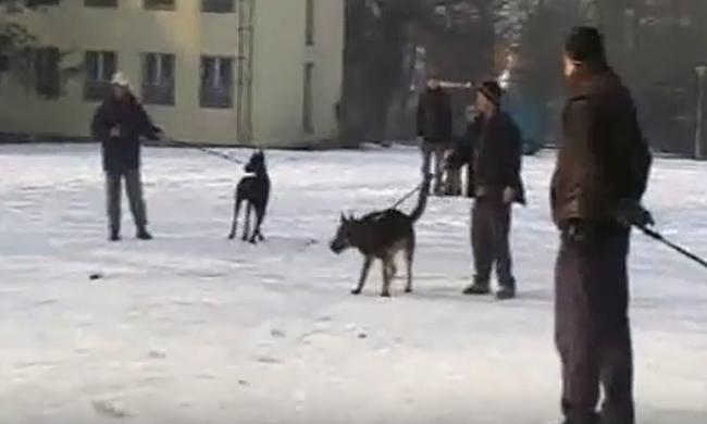 Lövésekkel tesztelik, melyik kutyából lehet rendőr - videóval
