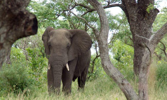 Lánya szeme láttára taposta halálra az elefánt a turistát