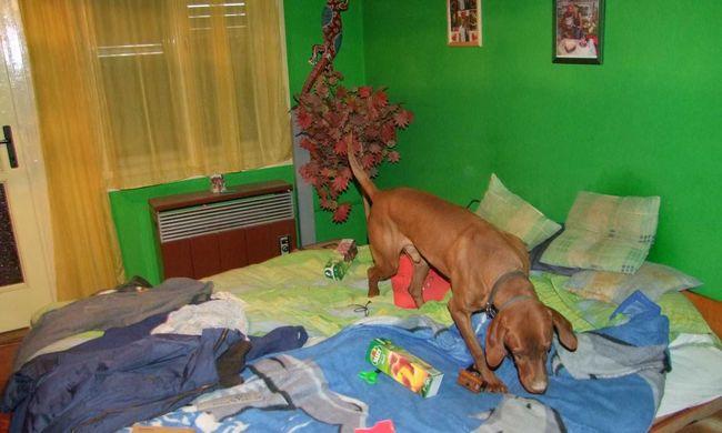 Gránátot és kábítószert talált a rendőrkutya egy lakásban